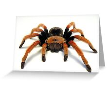 Mexican Beauty Tarantula Spider  Greeting Card
