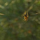 Golden Spider Dreams  by steppeland
