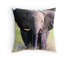 Young Elephant Bull Charging Throw Pillow