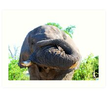 Elephant with trunk rolled up Art Print