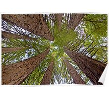 Colossal Canopy Poster