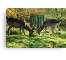 Whos going to make the first move? Canvas Print