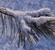 cold evergreen -craquelure by cherylc1