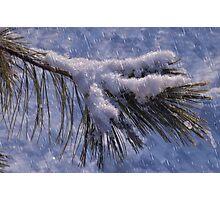 cold evergreen -craquelure Photographic Print
