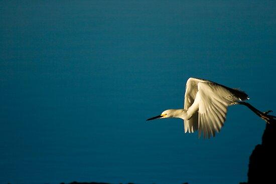 Snowy Egret's Flight by Jonicool