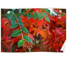 Contrasting Leaves Poster