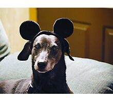 Scooby Mouse.... Photographic Print