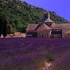 Lavender and Abbey, Provence, France by fauselr