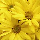 Yellow Flower Group by Adam Bykowski