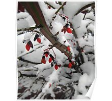 Snow on the Berries Poster