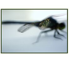 Macro shot of a portion of a dragon fly wing Photographic Print