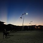 stray dogs, barra de lagoa, brazil by nickaldridge