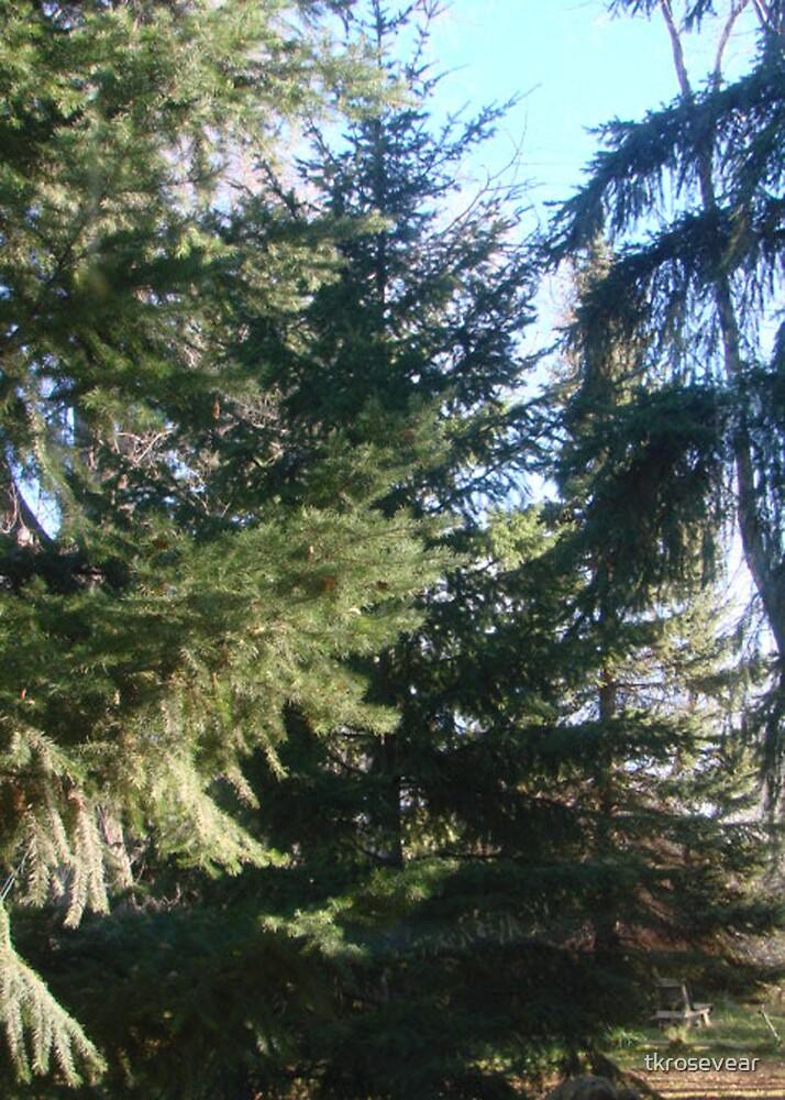 Coniferous Evergreen by tkrosevear