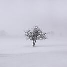 The solitary tree by miradorpictures