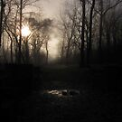 Foggy Dawn at the National Park in Great Falls, VA by Bine