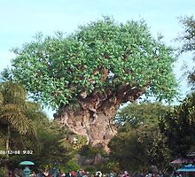 the tree of life in orlando florida  by david burton