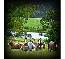 Draught Horses Photographic Print