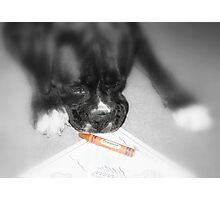 Orange -Boxer Dogs Series- Photographic Print