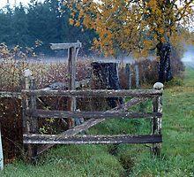 """"""" Fence Line"""" by Lynn Bawden"""