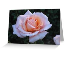 Perfect in Pink Greeting Card