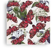 moth and botany Canvas Print