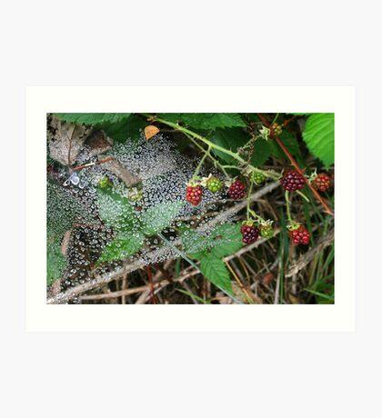 Dewy Web among the Berries * Art Print