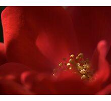 Rose Blossom 122 Photographic Print