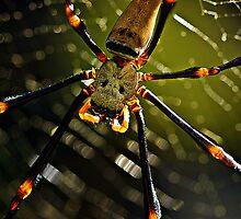 Spidey! by Jenny Dean