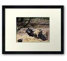 A Roll in the Hay Framed Print