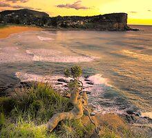 Survivor - Avalon Beach - The HDR Experience by Philip Johnson