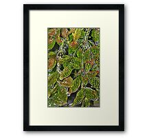 Alligator Holly Framed Print