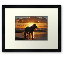 My Golden Retriever Ditte on the beach at sunset Framed Print