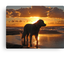 My Golden Retriever Ditte on the beach at sunset Canvas Print