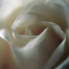 Rose by Mary Canning