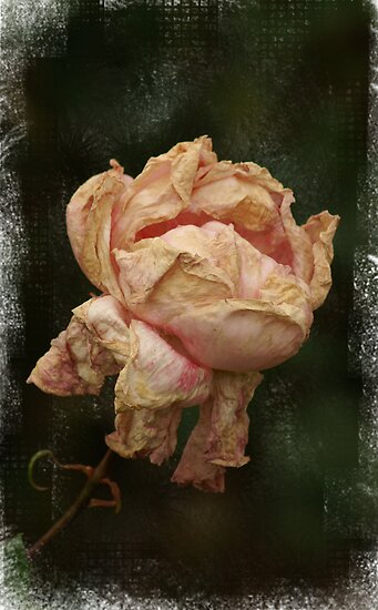 Rose by Kate Caston