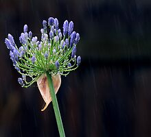 Loving the rain by Cathy Middleton