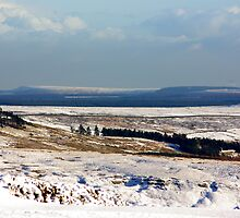Views of the North Yorks Moors National Park #5 by Trevor Kersley