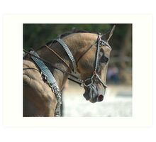 Akhal-Teke horse Art Print