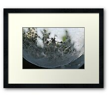 Spider's Ball Framed Print
