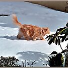 """"""" SUKI'S FIRST SNOW"""" by Malcolm Chant"""