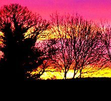 pink sky by Harry Hutchin