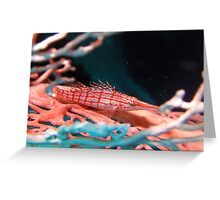 Long Nosed Hawkfish Greeting Card
