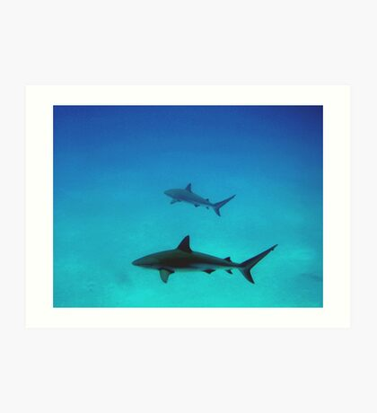Caribbean reef sharks Art Print