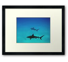 Caribbean reef sharks Framed Print