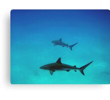 Caribbean reef sharks Canvas Print