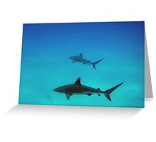Caribbean reef sharks Greeting Card