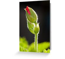 Tall Poppy Greeting Card