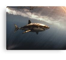 Great White Watercolours Canvas Print