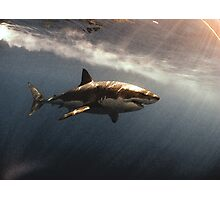 Great White Watercolours Photographic Print