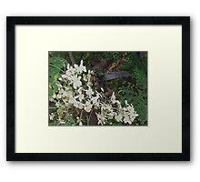 hummer Framed Print